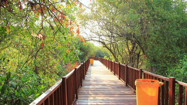 Merdunya Cuitan Burung Pagi Di Ekowisata Mangrove Wonorejo