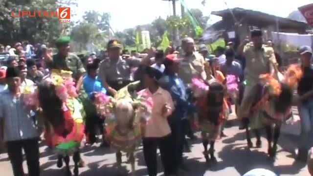 Menyambut Musim Tanam, Warga  Probolinggo Menggelar Ritual Mandi Lumpur. Diawali dengan arak-arakan sesepuh desa, menggunakan  kuda, hingga memulai tradisi mandi lumpu, di Dusun Mrico  Kabupaten Probolinggo.