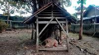 Penampakan punden Watu Nganten di Dukuh Ngelobener, Jepon, Blora, Jawa Tengah. (Liputan6.com/ Ahmad Adirin)