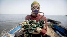 Supardi menunjukkan hasil tangkapannya berupa Kerang Hijau yang diambilnya di perairan pesisir Cilincing, Jakarta, Jumat (17/3). Supardi sudah menggeluti profesi sebagai nelayan kerang hijau selama 16 tahun. (Liputan6.com/Faizal Fanani)