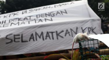 Seekor tikus dibawa mahasiswa yang mengatasnamakan Aliansi Mahasiswa Hukum Indonesia saat berunjuk rasa di depan Gedung KPK, Jakarta, Selasa (17/9/2019). Dalam aksinya mereka menolak revisi UU KPK karena dianggap melemahkan institusi tersebut. (Liputan6.com/Helmi Fithriansyah)