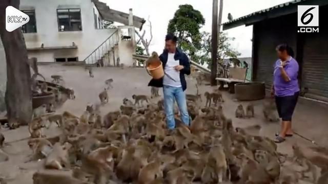 Turis asal Vietnam ini memberi makan puluhan monyet di Phuket, Thailand hingga kewalahan.