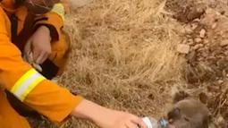Gambar dari video pada 22 Desember 2019, petugas pemadam kebakaran memberikan minum kepada seekor koala di tengah proses memadamkan api di Cudlee Creek, Australia Selatan. Koala itu terperangkap di sekitar kebakaran. (Oakbank Balhannah CFS via AP)