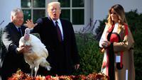Presiden AS, Donald Trump bersama Ibu Negara, Melania Trump memberikan pengampunan kepada kalkun bernama Peas dalam upacara tradisi tahunan perayaan Thanksgiving di Gedung Putih, Washington, Selasa (20/11). (AP/Manuel Balce Ceneta)