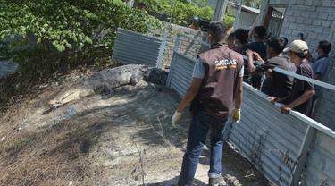 BKSDA Sulteng melapas buaya di penangkaran