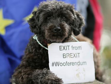 Pawai Wooferendum