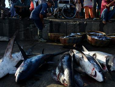 Hiu Masih Marak di Aceh