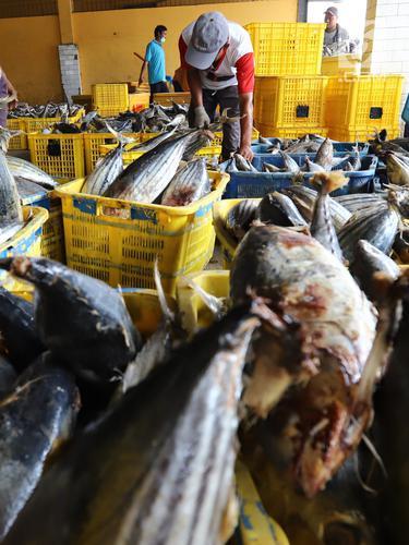 Semester I 2018, Ekspor Perikanan Alami Peningkatan