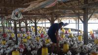 Peternak ayam di Desa Ujung Rambung, Muslim mengatakan, dirinya terus merugi sejak tiga minggu terakhir. Peternak ayam merugi karena harga jual lebih tinggi dari pada harga produksi.