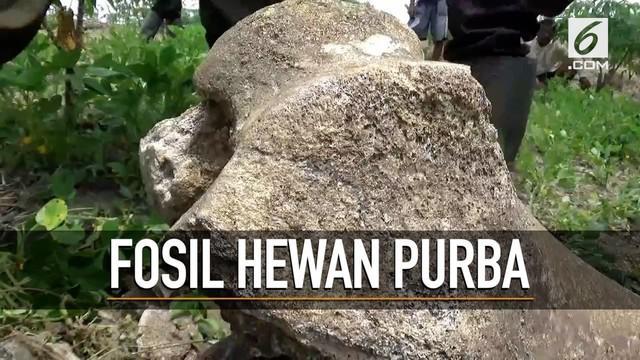 Seorang petani menemukan sejumlah benda yang diduga fosil hewan purba saat bekerja di kebun.