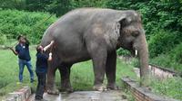 Kaavan, seekor gajah yang dijuluki sebagai gajah paling kesepian di dunia akan tiba di Kamboja dari Pakistan. (Photo credit: Aamir QURESHI/AFP/File)