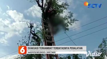 Sabtu sore (03/4) seorang warga Desa Jiyu, Kabupaten Mojokerto, Jawa Timur, tewas akibat tersengat listrik saat memotong pohon setinggi puluhan meter.