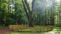 Meskipun hanya sebuah pohon, nyatanya pohon ini menjadi biro jodoh layaknya aplikasi kencan.