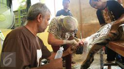 Harimau Sumatera saat menjalani operasi di Taman Nasional Batang Gadis, Sumut, Senin (30/11/2015). Harimau tersebut harus menjalani operasi karena kakinya terluka dan membusuk akibat terkena perangkap Rusa. (Foto: Ori Kakigunung)