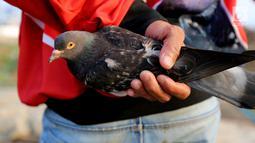 Warga menggenggam burung merpati di bantaran Kanal Banjir Barat (KBB), Petamburan, Jakarta, Kamis (21/9). Bermain burung merpati merupakan hobi yang digemari warga di bantaran Kanal Banjir Barat untuk mengisi waktu libur. (Liputan6.com/Johan Tallo)