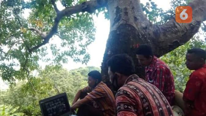 Foto : Kepala Desa Woloklibang, Adonara Barat, Flores Timur, NTT saat berada di atas pohon mencari sinyal (Liputan6.com/Ola Keda)