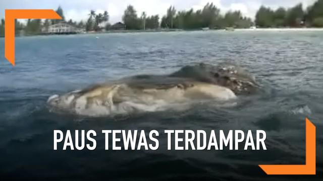 Paus sepanjang 12 meter ditemukan membusuk oleh nelayan di sekitar Pantai Pulau Bokori.
