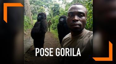 Foto ini viral lantaran dua gorila tersebut berpose dengan meniru gaya manusia ketika diajak berswafoto oleh penjaga hutan. Dua gorila itu berdiri dengan dua kaki dan bergaya layaknya manusia pada umumnya.