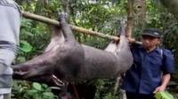 Serangan babi hutan atau celeng membuat resah masyarakat di Desa Piteren, Padukuhan, Purworejo, Jawa Tengah. (Liputan 6 SCTV)