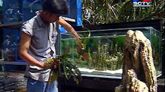 Taman Air Mempercantik Akuarium News Liputan6 Com