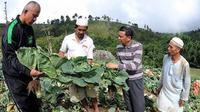 Cagub Sulsel, Nurdin Abdullah sedang meninjau hasil panen warga di Kabupaten Bantaeng (Liputan6.com/ Eka Hakim)