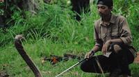Muamar Syahida, mahasiswa kehutanan di Pekanbaru, Riau, penakluk king cobra hidup dengan belasan ular beracun atau berbisa. (M Syukur/Liputan6.com)