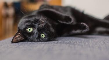7 Bukti Kucing Hitam Lebih 'Bar-bar' Dibanding Kucing Oranye