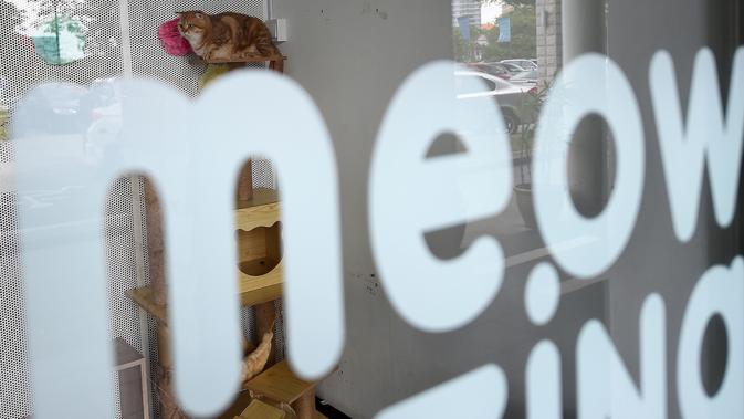 Seekor kucing yang menginap di hotel bintang lima khusus untuk kucing yang diberi nama CatZonia di Shah Alam, Kuala Lumpur, 6 Agustus 2018. Suhu ruangan, tempat tidur, arena bermain semuanya dirancang khusus untuk memanjakan kucing. (AFP/Manan VATSYAYANA)#source%3Dgooglier%2Ecom#https%3A%2F%2Fgooglier%2Ecom%2Fpage%2F%2F10000