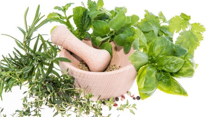 400 Gambar Daun Herbal