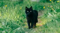 Ilustrasi kucing (dok.unsplash)