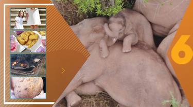 Misteri Ledakan Beruntun, Gajah yang Berjalan 500 Km dan Hebohnya Bungkus BTS Meal