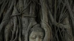 Wajah patung Buddha terlihat di antara akar pohon di kuil Wat Mahathat, Ayutthaya, Thailand Ayutthaya (25/12/2015). Patung kepala Buddha ini telah ada sejak Kerajaan Ayutthaya runtuh akhir abad ke-18. (REUTERS/Jorge Silva)