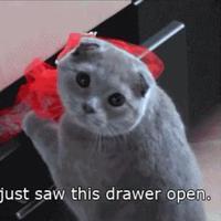 Pembuktian yang dilakukan kucing manis ini kalau ia juga bisa menari ballet.