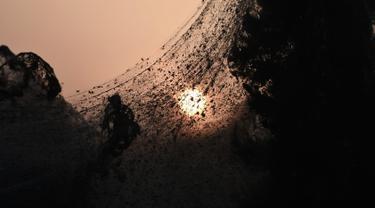 Laba-laba terlihat di  jaring mereka yang menutupi jalan di samping danau Vistonida, utara Yunani, 18 Oktober 2018.  Fenomena langka ini disebabkan meningkatnya populasi laba-laba yang dipicu banyaknya ketersediaan makanan di sana. (Sakis MITROLIDIS/AFP)