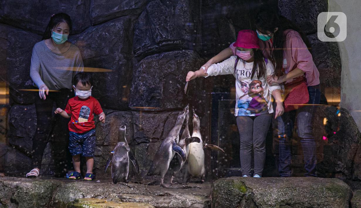 Pengunjung memberi makan koleksi satwa Jakarta Aquarium & Safari di Jakarta Barat, Jumat (12/2/2021). Jakarta Akuarium merupakan tempat konservasi alam dan satwa laut yang memiliki konsep edutainment sekaligus menjadi destinasi wisata untuk warga menghabiskan libur Imlek (Liputan6.com/Faizal Fanani)
