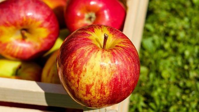 Jaga Pencernaan dan Cegah Infeksi Lambung Anak dengan Apel