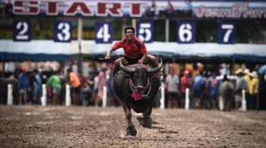 Seorang joki memacu kerbaunya dalam perlombaan balap kerbau tahunan di Provinsi Chonburi, selatan Bangkok, Thailand, Sabtu (12/10/2019). Balap Kerbau tahunan diadakan sebagai bentuk terima kasih kepada kerbau-kerbau itu yang bekerja untuk para petani sepanjang tahun. (Lillian SUWANRUMPHA/AFP)
