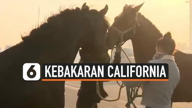 Kebakaran besar melanda beberapa area di kota California, Amerika Serikat, Rabu (30/10/2019) kemarin. Warga dan kuda peliharaan mereka segera mengevakuasi diri. Namun, terjadi pemandangan yang tidak biasa, seekor kuda jantan kembali ke hutan untuk se...