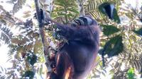 Taman Nasional Sebangau berlokasi di Kabupaten Katingan, Palangkaraya, Kalimantan Tengah.