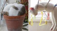 Kelakuan Kucing Tidur di Tempat Tak Biasa (Sumber: Twitter/crowdedx)
