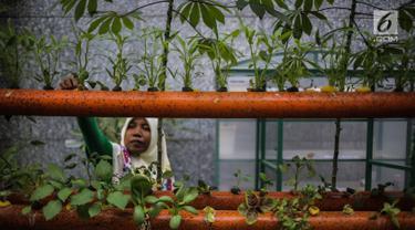 Balkot Farm, Percontohan Pertanian Perkotaan di Area Perkantoran