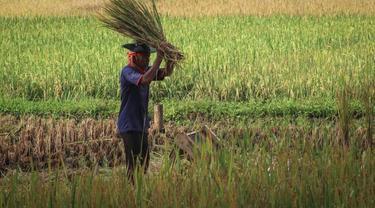 Startup Bidang Agrikultur Indonesia Menang Kompetisi Bisnis Sosial di Singapura