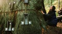 Julia Hill tinggal di atas pohon redwood tua berusia 1.500 tahun  (AP/Shaun Walker)