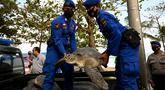 Anggota Ditpolairud Polda Bali menggotong penyu hijau (Chelonia mydas) saat pelepasliaran di Pantai Kuta, dekat Denpasar, Rabu (5/8/2020). Sebanyak 25 dari 36 ekor penyu hijau hasil sitaan dari upaya penyelundupan di perairan Serangan, Denpasar, dilepasliarkan. (SONNY TUMBELAKA/AFP)