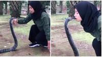 Gadis ini pamer atraksi taklukan king cobra 4 meter, bikin deg-degan netizen. (Sumber: TikTok/auliakhairunisa12)