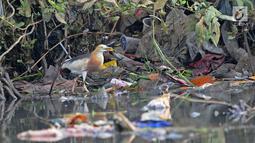 Burung residen Blekok Sawah (Ardeola speciosa) terlihat di kawasan Hutan Lindung Angke Kapuk, Jakarta, Sabtu (11/5/2019). Kegiatan dalam rangka Hari Burung Migrasi Sedunia tersebut mengangkat tema Lindungi Burung: Jadi Solusi Terhadap Polusi Plastik. (Liputan6.com/Herman Zakharia)