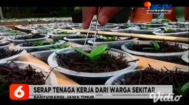 Budi daya tanaman anggrek milik Rohimah yang berada di kaki Gunung Raung, Kabupaten Banyuwangi, Jawa Timur terus berkembang. Kini dari budi daya tanaman anggrek bisa menghasilkan pundi-pundi rupiah bagi keluarga dan warga sekitarnya.