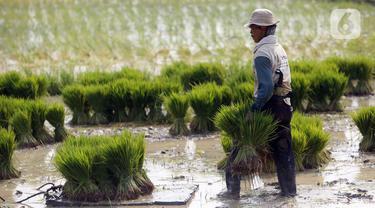 FOTO: Sektor Pertanian Melesat di Masa Pandemi COVID-19