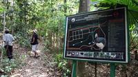 Taman Nasional Bogani Nani Wartabone (Yoseph Ikanubun/Liputan6.com)