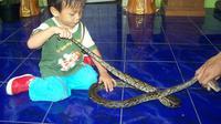 Anak kecil memegang ular. (Foto: Liputan6.com/Muhamad Ridlo)
